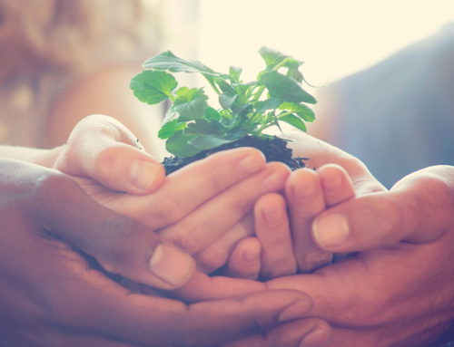 CSR and Sustainability Go Hand in Hand for Business Success