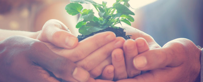 Multiple hands holding a plant