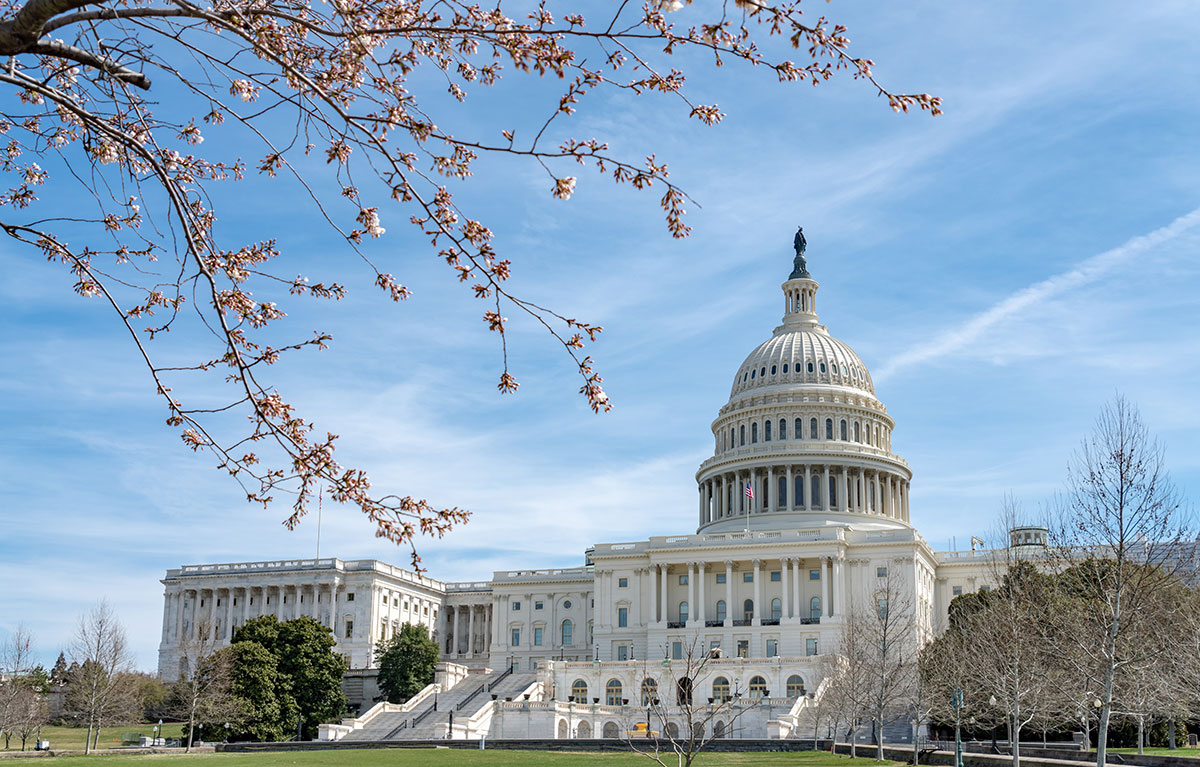 United States Capitol during national cherry blossom festival in Washington DC