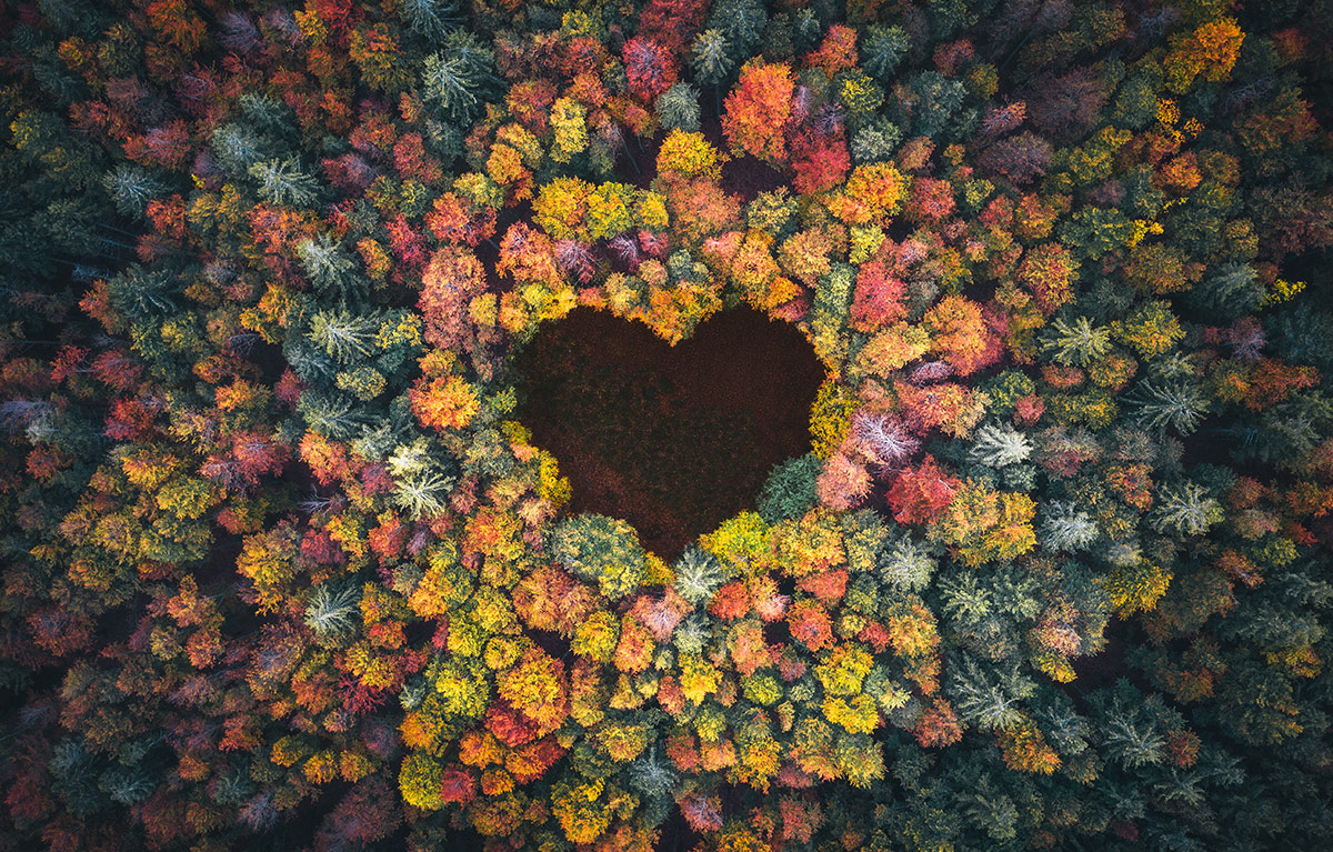 Trees forming a heart shape